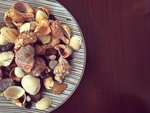 Coquilles et roches de mer Photo stock