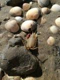 Coquilles et un cloporte sur le sable Images stock