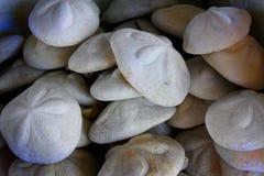 Coquilles gonflées de biscuit de mer Photos libres de droits