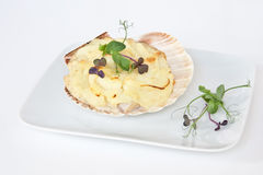 Coquilles Heilige Jacques stock foto's