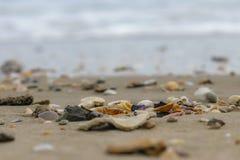 Coquilles le long des garçons de plage perdus photo stock