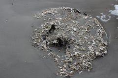Coquilles minuscules sur le rivage Photo libre de droits