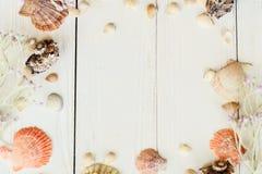 Coquilles naturelles sur les conseils en bois Concept de fond de bord de la mer Place pour le texte photographie stock