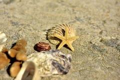 Coquilles, pierres, sable Photos stock