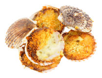 Coquilles St Jacques Stock Fotografie