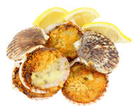 Coquilles St Jacques Royalty-vrije Stock Afbeelding