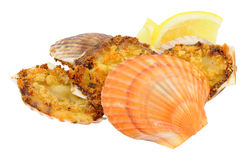 Coquilles St Jacques Stock Images