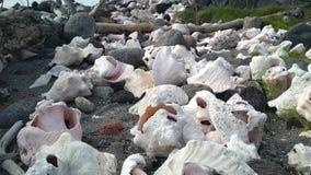Coquilles stupéfiantes sur la plage d'île des Caraïbes image libre de droits