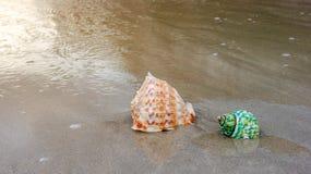 Coquilles sur la plage Image stock
