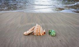 Coquilles sur la plage Photos stock