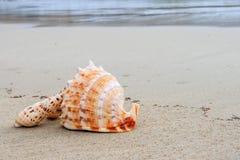 Coquilles sur la plage Image libre de droits