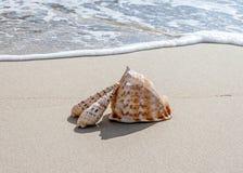 Coquilles sur la plage Photos libres de droits
