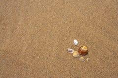 Coquilles sur la plage Images libres de droits