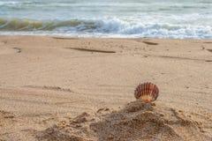 Coquilles sur la plage Images stock