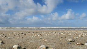 Coquilles sur la plage néerlandaise Photos libres de droits