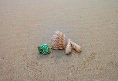 Coquilles sur le sable Photos libres de droits