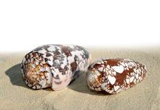 Coquilles sur le sable Photographie stock