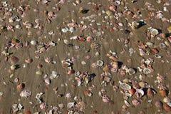 Coquilles sur le sable Photographie stock libre de droits