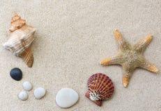 Coquilles sur le sable Image libre de droits