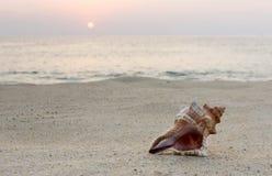 Coquilles sur le sable image stock