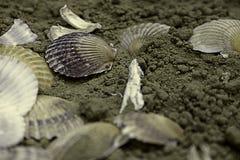 Coquilles sur le sable Images stock