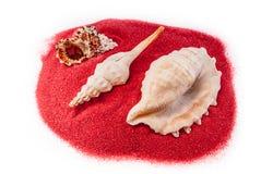 Coquilles sur le sable d'isolement sur le fond blanc Photo libre de droits