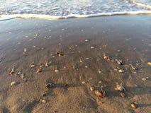 Coquilles sur une plage néerlandaise Image libre de droits