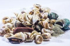 Coquilles tropicales de mer Photo libre de droits