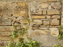 Coquina墙壁 免版税图库摄影