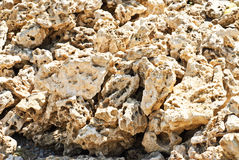 Coquina background. Grunge fossil limestone texture Stock Photo