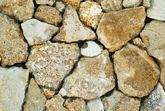 Coquina background old fossil Royalty Free Stock Image
