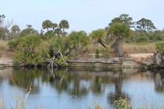 Coquina pond Royalty Free Stock Photo