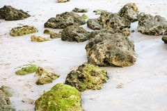 coquina rocks in sand on beach of Atlantic Ocean Royalty Free Stock Photography