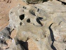 Coquina Shell Kołysa na Plażowym zbliżeniu zdjęcie royalty free
