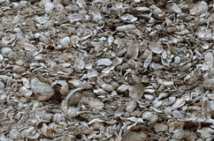 Coquina shell wall in St. Augustine, Florida Royalty Free Stock Photos