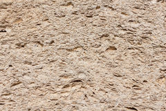 Coquina stone texture Royalty Free Stock Images