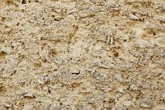 Coquina texture Stock Photo