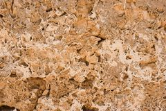 Coquina wall background Stock Photo