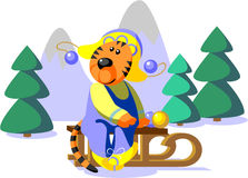 Cor 01 do inverno do tigre Imagens de Stock Royalty Free