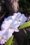 Cor brilhante da orquídea Imagens de Stock Royalty Free