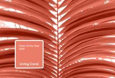 Cor coral de vida do ano 2019 E fotografia de stock