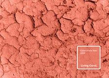 Cor coral de vida do ano 2019 Terra secada seca com coral na cor na moda fotos de stock