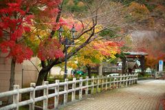 Cor da árvore de bordo japonês Fotos de Stock Royalty Free