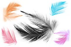 A cor da coleção tende o fundo da textura da pena da galinha Imagem de Stock