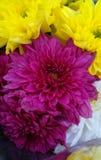 Cor da flor imagens de stock