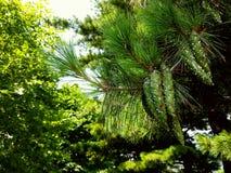 A cor das árvores Imagens de Stock