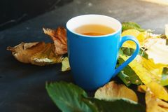 Cor das folhas de outono Chá perfumado com dentro uma caneca em um círculo o foto de stock