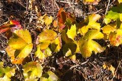 Cor das folhas do inverno Fotos de Stock