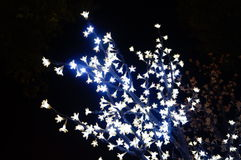 A cor de luzes de néon Imagem de Stock Royalty Free