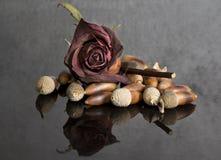 Cor-de-rosa com bolotas Imagens de Stock Royalty Free